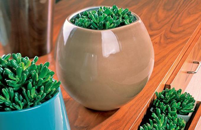 Teplomilné sukulentní rostliny zvláštních tvarů